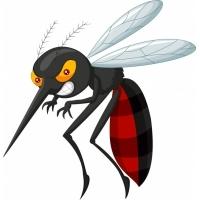 Radio Mosquito